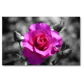 Αφίσα (φύση, τριαντάφυλλα, λουλούδια, ροζ, μαύρο, λευκό, άσπρο)